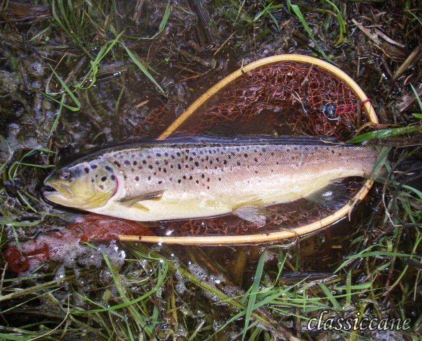 Pesca a mosca in Gacka