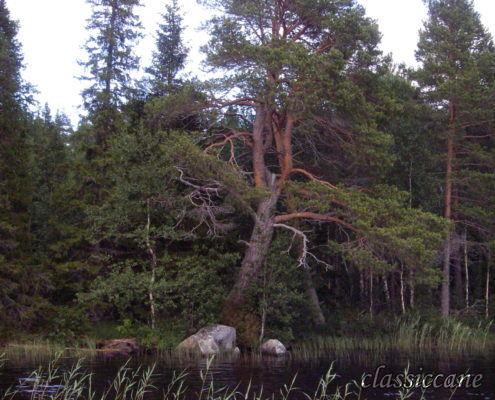 Jamtland Svezia 2010